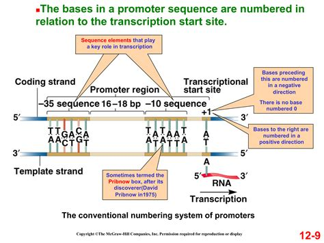 genetics - Why are prokaryotic promoter sequences written