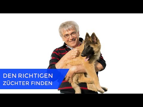 Chihuahua Züchter Mv - Pets and Animal Educations